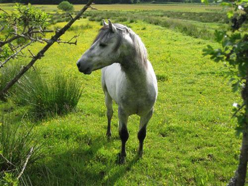 Eastlands Harleybrae first foal