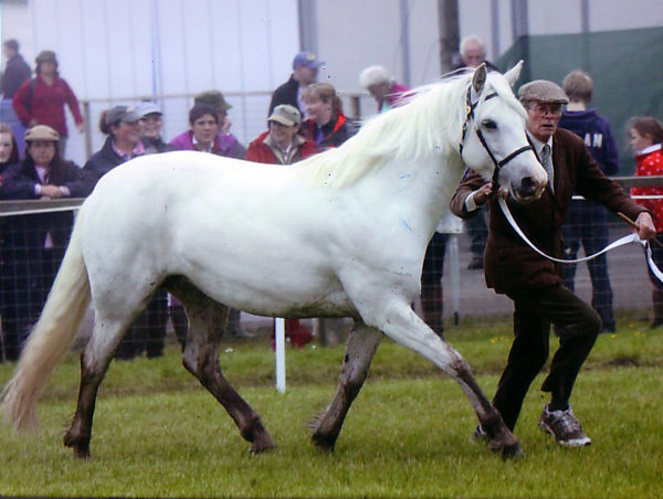 Mossie-Royal-Highland-2012