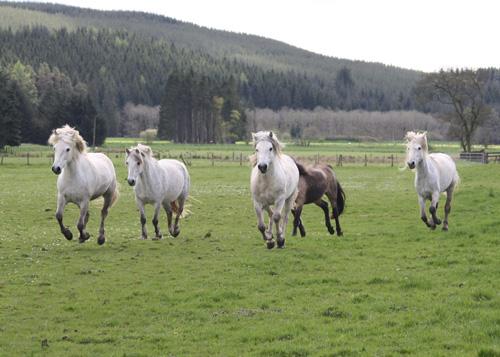 stallion3